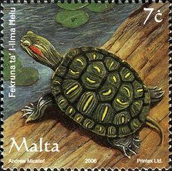tortue_malte
